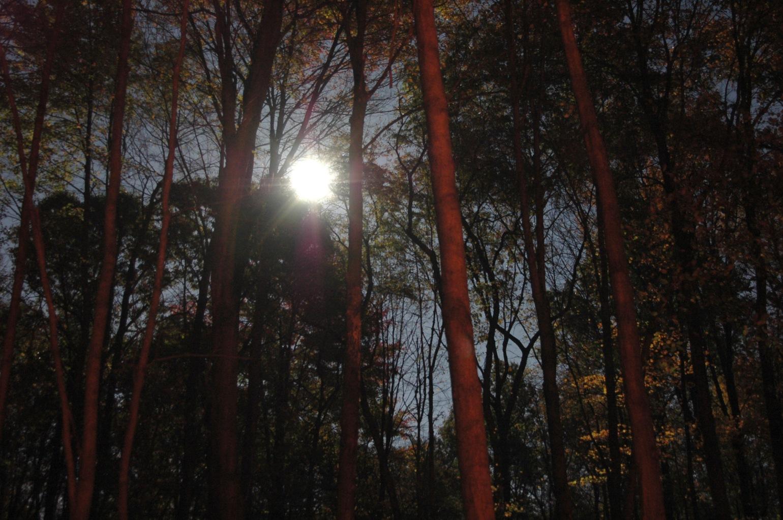 photo_21185_20111111