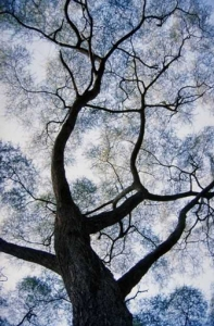 Trees & Plants 3902-web