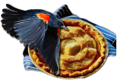 blackbird-pie